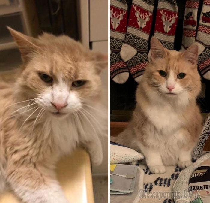 18 пожилых кошек, которым 20 и больше лет, но они не растеряли свой шарм и очарование