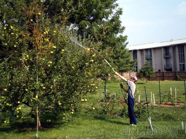 Опрыскать яблони весной от вредителей как это сделать правильно