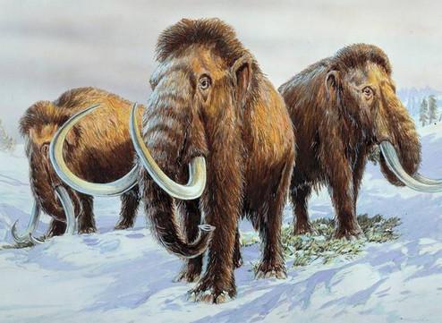 Как жили мамонты в Сибири (15 фото 3 видео)