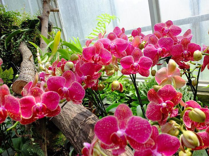 Ботанический сад Ухани