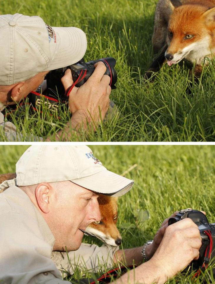 животные фотографы, животные желающие стать фотографами