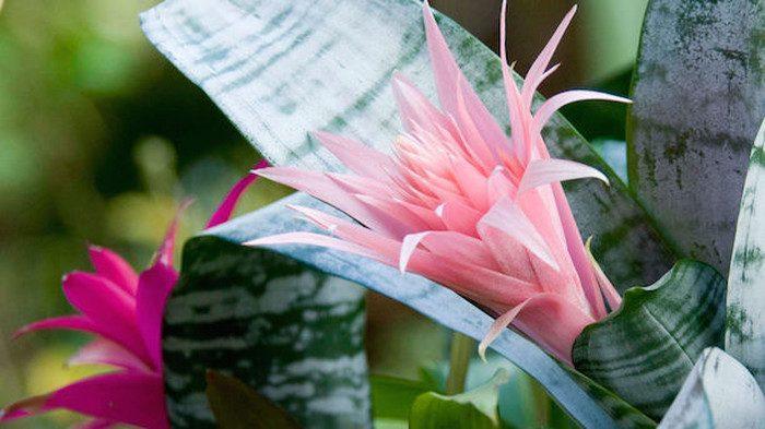 Растения, которые невозможно погубить