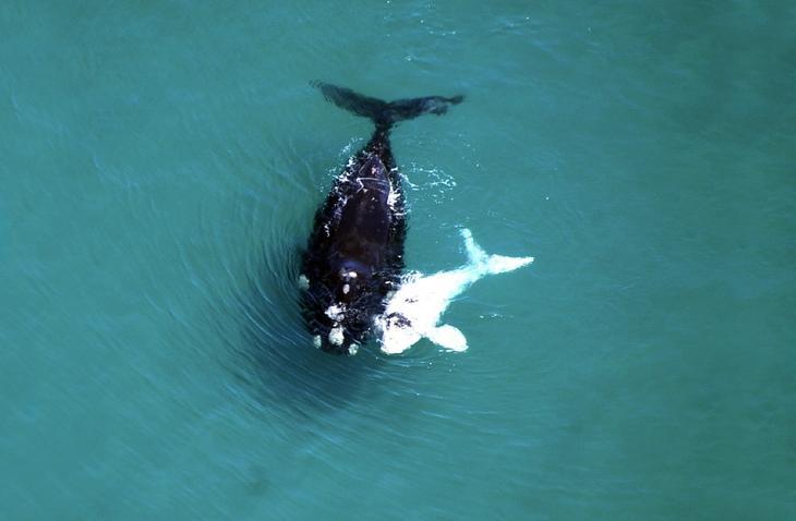 fotografii kitov 16