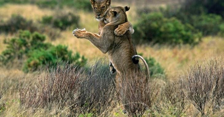 luchshie foto zhivotnyx nedeli v dekabre 12 Лучшие фотографии животных со всего мира за неделю