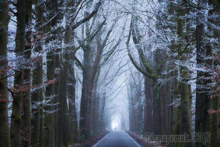 Красивые фотографии леса