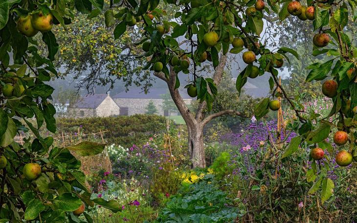 Результаты конкурса Садовый фотограф года 2018 8