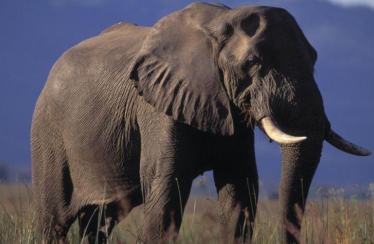Ещё 10 уникальных животных со сверхспособностями, в которые трудно поверить