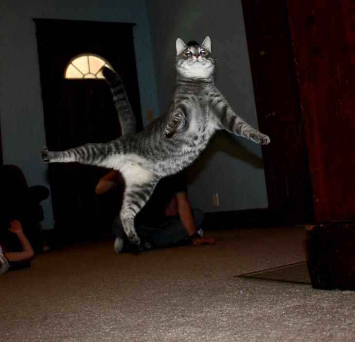 Забавные коты в полете фото
