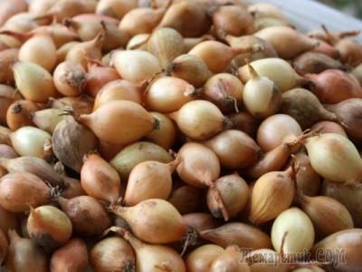 Как хранить лук севок до посадки весной феврале в квартире