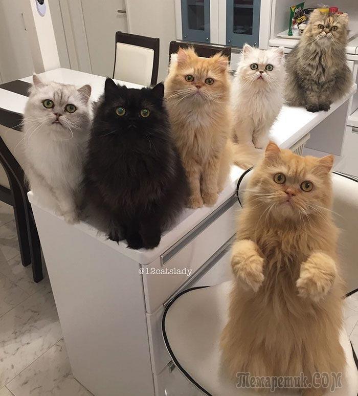 Владелица 12 персидских кошек взорвала инстаграм фотографиями своих очаровательных питомцев