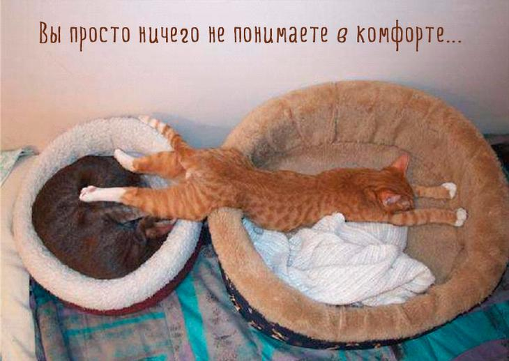 кошка смешно спит