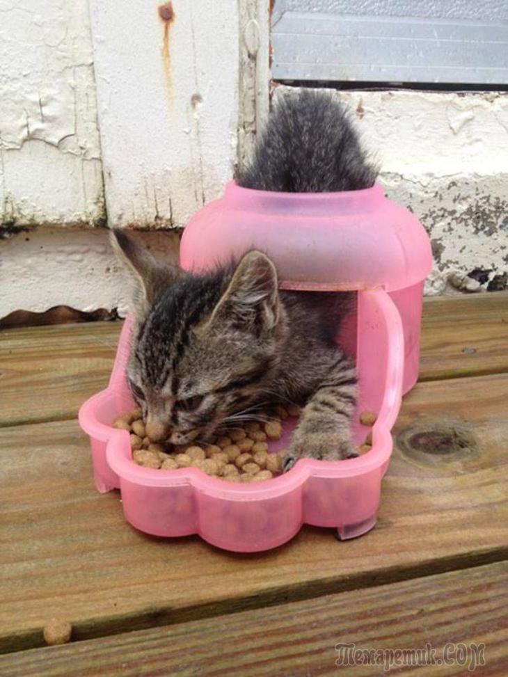 15 смешных доказательств того, что у кошек отсутствует логика
