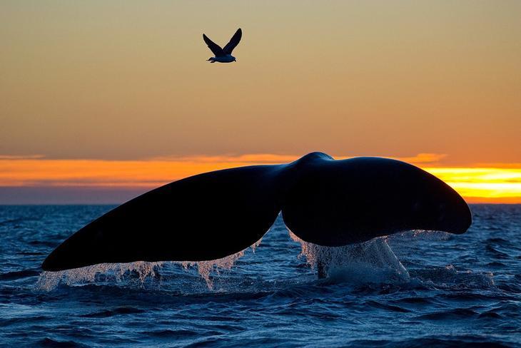 fotografii kitov 13