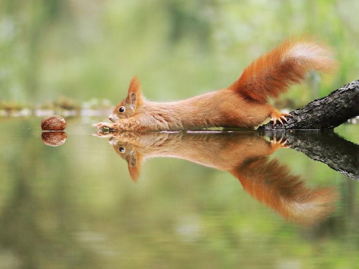 Позитив из дикой природы в фотографиях