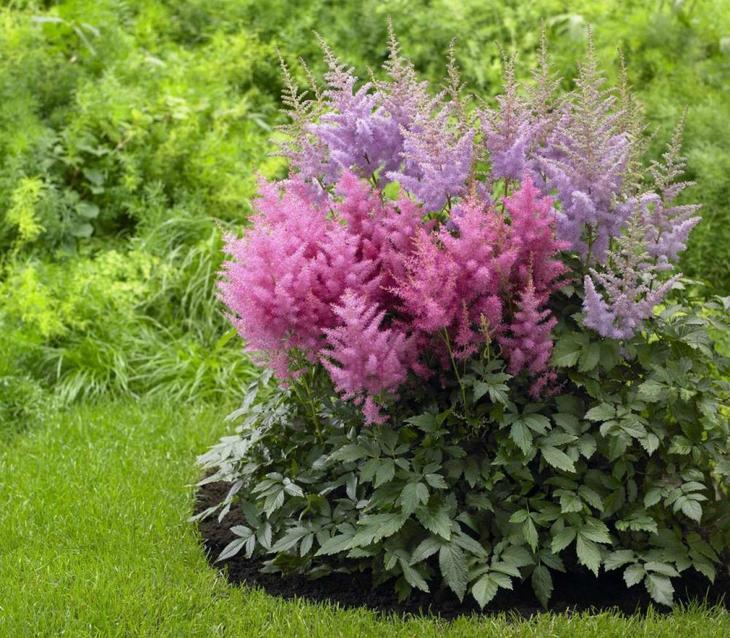 Какие цветы посадить и посеять в августе?