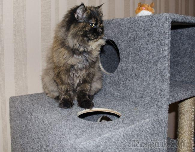 Домик для кошки за несколько дней