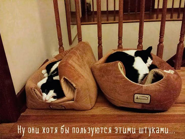 две кошки на лежаках