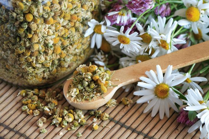 Ромашка для Желудка и Кишечника - как пить, рецепты и свойства