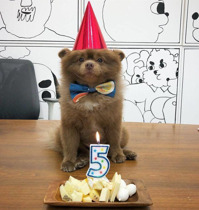 Собаку-медведя бросили, потому что он был «слишком большим», но в него влюбился Интернет