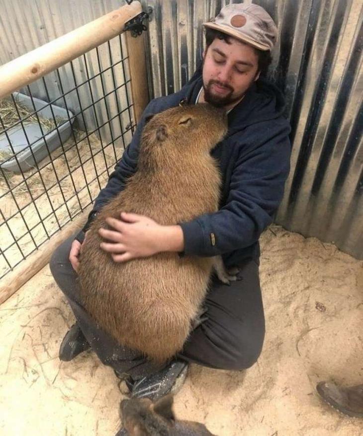 Доказательства того, что животные на 99 % состоят из любви