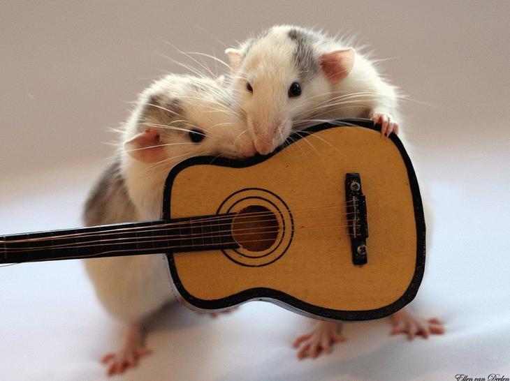 Крысы с гитарой. Эллен ван Дилен. Фото