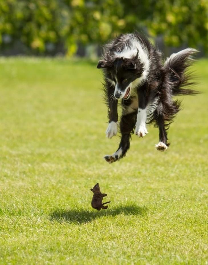 Подборка забавных собакенов животные, собаки, фото