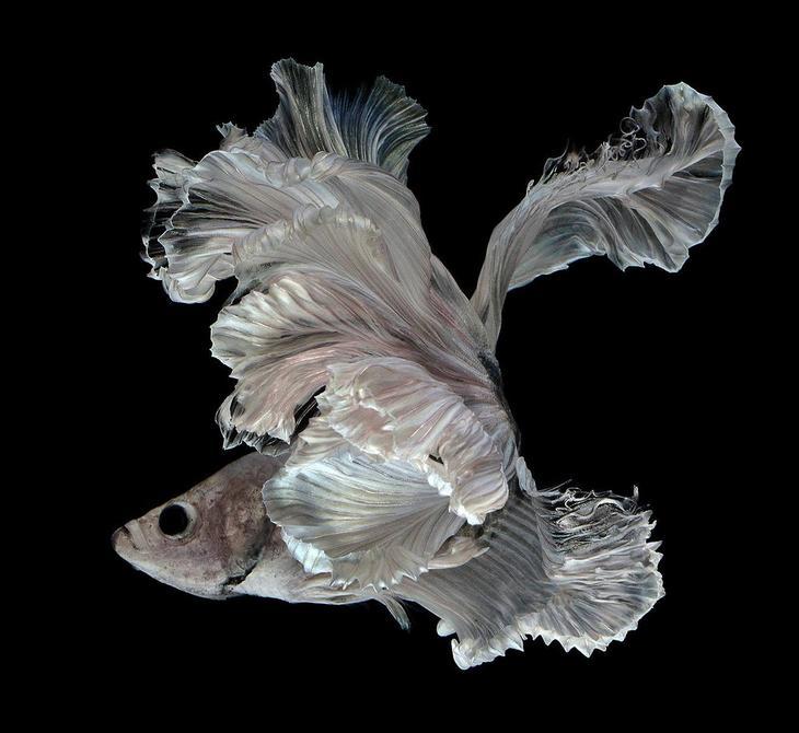 Тайский фотограф делает фантастические снимки рыб