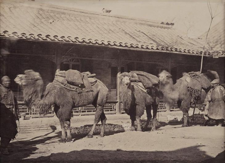 Редчайшие кадры Китая времён династии Цин: природа, люди, города безвозвратно ушедшей эпохи 37