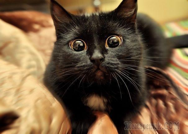 25 артистичных котов, которые заслуживают «Оскар»