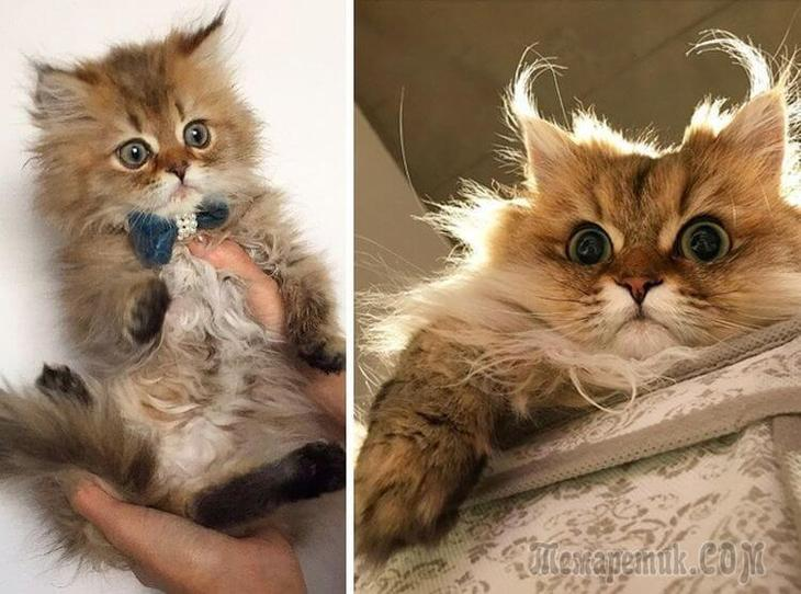 Доказательство, что коты растут ну очень быстро