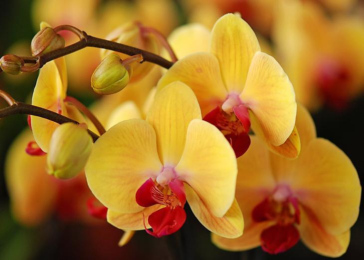 NewPix.ru - Про орхидеи. Красивые фотографии орхидей