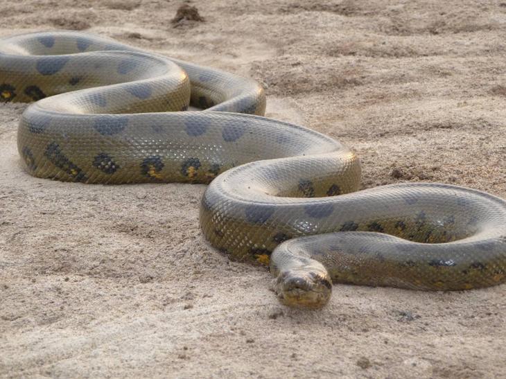 К чему снится змея во сне мужчине
