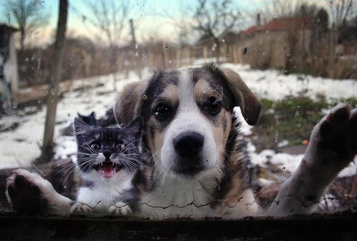 фото приколы с животными