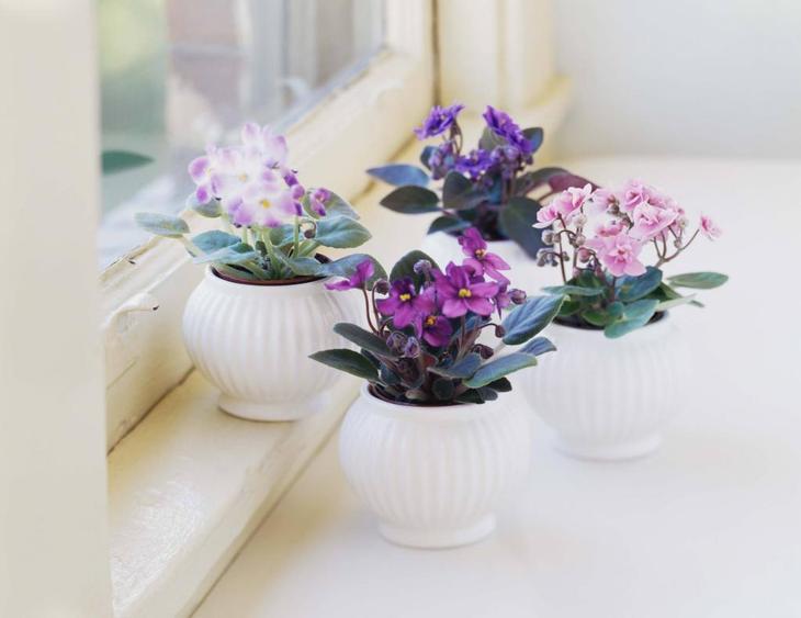 Какие цветы можно выращивать дома в горшках из семян?