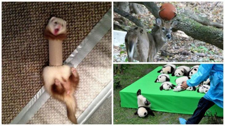 Забавные казусы с животными