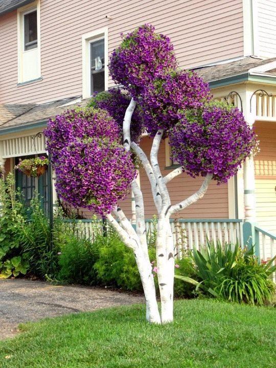 Дерево с петуниями