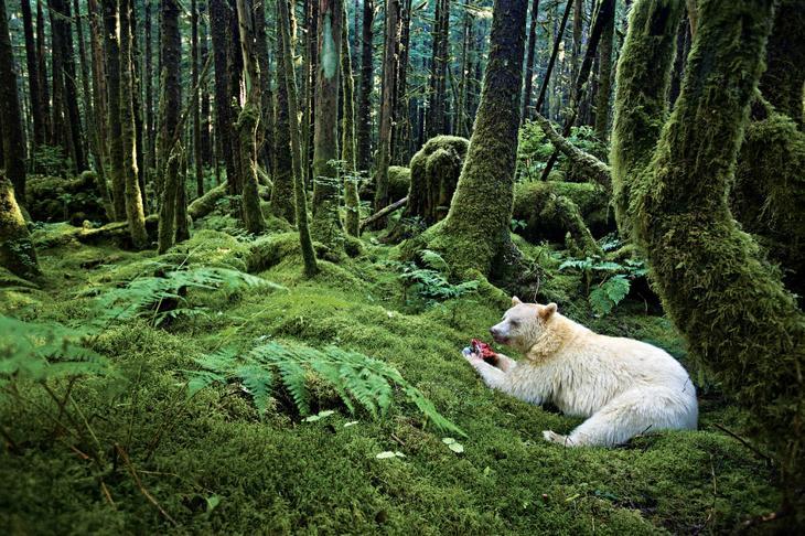 Медведь в лесу loverme
