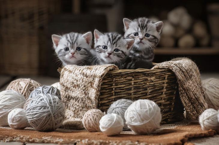 Старинная загадка: два котика спрятались на картинке, где же они?