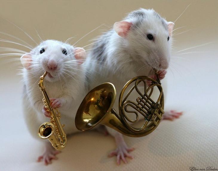 Крысы-музыканты Эллен ван Дилен. Фото