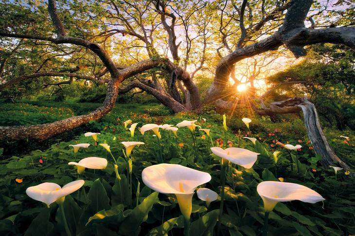 Государственный парк Эль-Капитан, штат Калифорния
