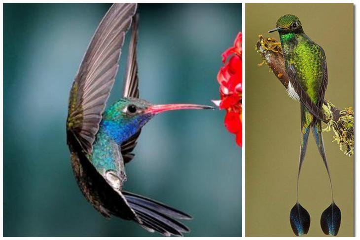 Колибри — единственная птица, которая умеет летать задом наперёд или вверх ногами. интересное, колибри, природа, птицы, факты, фауна