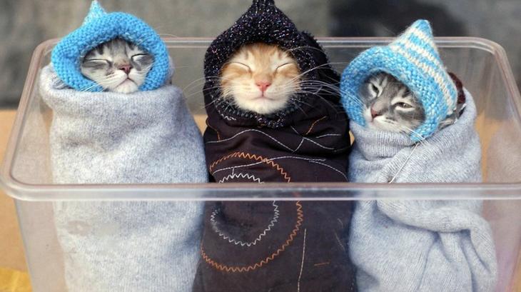три кошки в пеленках