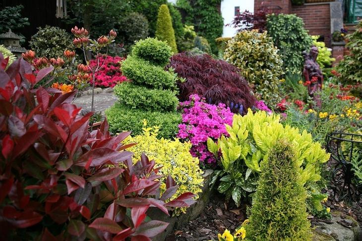 Вечнозеленые растения для сада - Деревья и кустарники