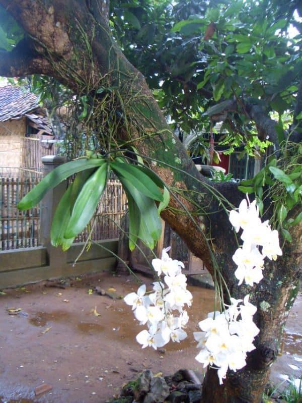 Правильный уход за орхидеей фаленопсис в домашних условиях