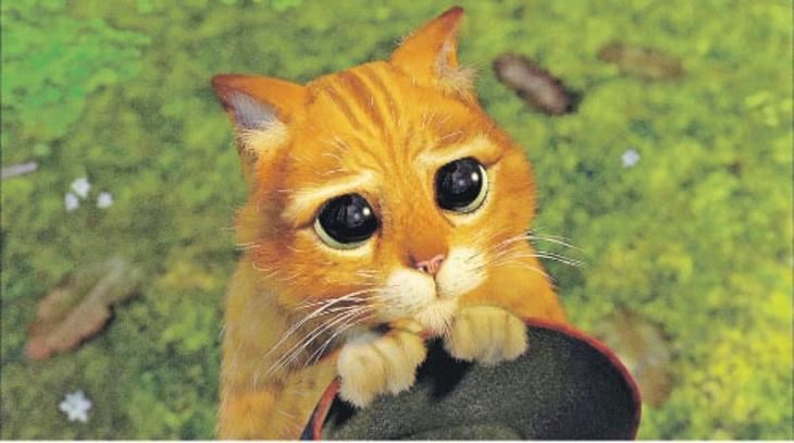 Тот самый момент из мультфильма! Внимание: не показывайте это кошкам - они быстро учатся! до слёз, животные, коты, кошки, питомцы, ржач, смех, юмор