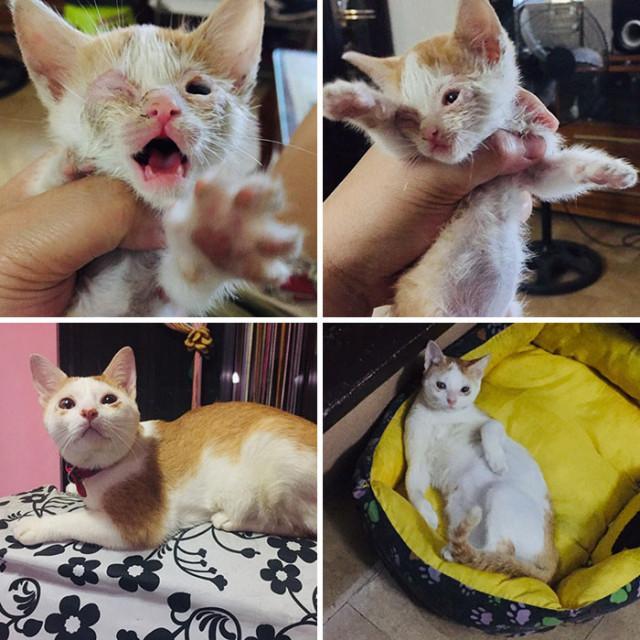 Фотографии кошек до и после того, как их спасли от бездомной уличной жизни