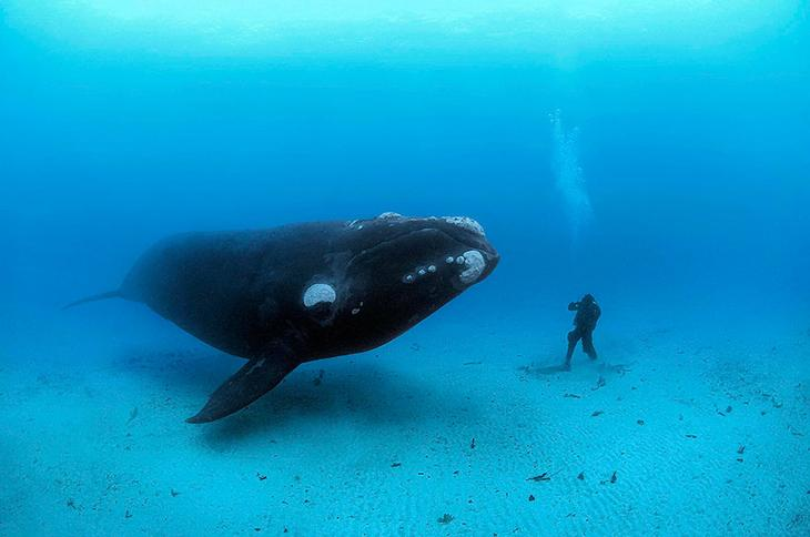 fotografii kitov 21