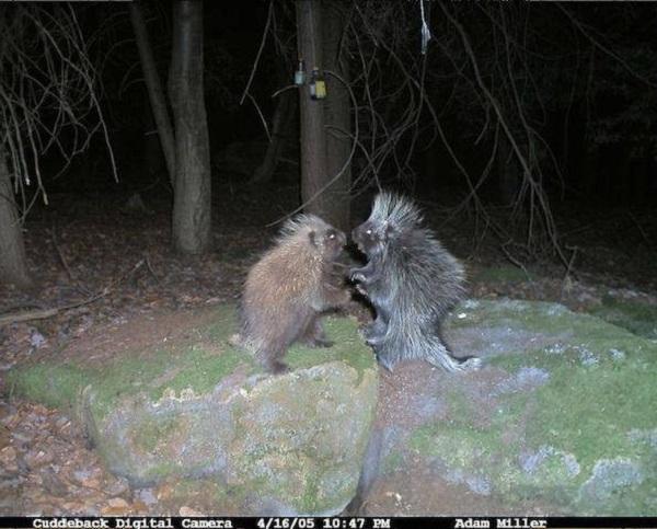 Животные ночью в лесу