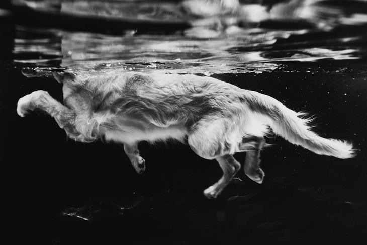 Победители фотоконкурса Dog Photographer of the Year 2018 7