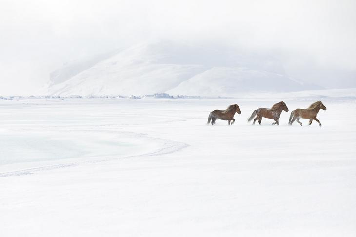 loshadi-Islandii-fotograf-Dryu-Doggett 15